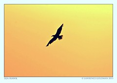 Flight (lhg_11, 2million views. Thank you!) Tags: sky beach silhouette gull malibu southerncalifornia leocarrillostatebeach