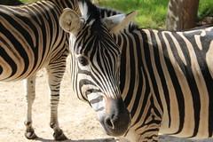 Tierpark Stadt Haag - Austria (Been Around) Tags: park animal animals zoo austria tiere österreich europa europe eu tierpark niederösterreich tier autriche austrian aut loweraustria nö stadthaag tierparkhaag expressyourselfaward