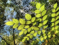 (Tlgyesi Kata) Tags: autumn foliage botanicalgarden vcrtt sz botanikuskert vcrttibotanikuskert withcanonpowershota620