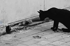 A Strange Encounter (Maria Michalinos-www.debop.gr/deBlog/the-athenians) Tags: blackandwhite bw dog chien monochrome animal cat canon chat athens paws muzzle pattes museau canoneos7d ilobsterit littledoglaughednoiret