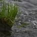 fauna grass river A3335
