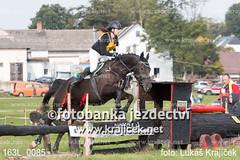 163L_0085 (Lukas Krajicek) Tags: military czechrepublic cz kon koně vysočina vysoina southbohemianregion blažejov dvoreček všestrannost dvoreek