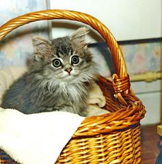 00389 (d_fust) Tags: cat kitten gato katze  macska gatto fust kedi  anak katt gatito kissa ktzchen gattino kucing   katje     yavrusu