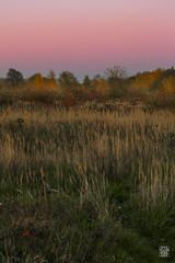 2015-11-01_Q8B4063 © Sylvain Collet.jpg (sylvain.collet) Tags: autumn france nature automne sur marne vairessurmarne vaires