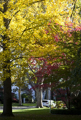 more fall colors (fgmachine) Tags: red fab yellow neighborhood northern 40s sacramentocalifornia pentaxk50 fall2015 idealisitic