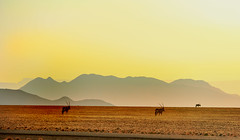 Overlooking Sesriem with Gemsbok Oryx @ Sunset (paulafrenchp) Tags: