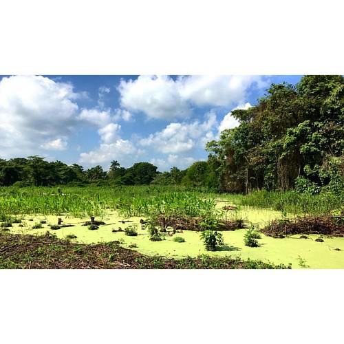 Pantano #paraiso #sitio #terreno #nuevoproyecto