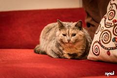 20151207 - Prova D750 (LOW) 20 (DAVIDE SPAGNA SPD) Tags: cats cat nikon d750 gatto gatti tamaron