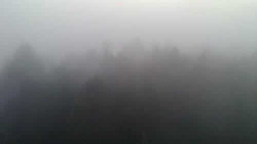Hutwisch im Nebel 7
