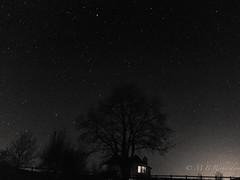 29/11/15 (Sasquatchpics) Tags: longexposure trees winter blackandwhite night blackwhite nireland colondonderry canons95 canonpowershots95 365in2015