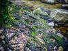 La brague (epigout06) Tags: iptcsubjects ressourcesnaturelles root racine rivières nature green photoculinaire accompagnementsgarnituresetsauces vert condiments piments environnement iptcnewscodes 06000000 06006000 06006006 06007000 nourriture photodecuisine environmentalissue naturalresources rivers