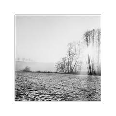 Dreamy light (cardijo) Tags: austria österreich salzburg landschaft landscape sun sonne tree snow baum schnee sw bw schwarzweis blackandwhite analog film fp4 ilford rodinal rolleiflex tessar carlzeiss nikon coolscan