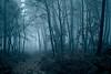 Perdu... (david49100) Tags: 2016 maineetloire seichessurleloir arbres chemin d5100 décembre nikon nikond5100 path trees