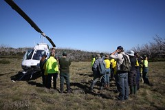 Remote helicopter assisted surveys (Environment + Heritage NSW) Tags: officeofenvironmentandheritage orangehawkweed orangehawkweedcontrolprogram weed weedcontrol weedprogram eradication survey huntinghawkweed hawkweed mouseear volunteers volunteerprogram volunteer