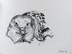Calonectris borealis (Stefanie Klemm) Tags: azores azoren zeichnung skizze drawing sketch sturmtaucher shearwater vogel bird