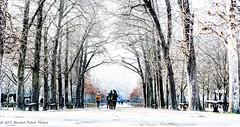 Jardin du Luxembourg. Paris, janv 2017 (Bernard Pichon) Tags: paris6earrondissement îledefrance france fr bpi760 jardinduluxembourg sénat canonflickraward