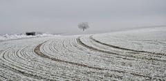 #AM Oh ma Sibérie nivernaise bien aimée :-) (Thierry.Vaye) Tags: givre hiver nièvre campagne nivernais champ