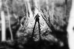 (blazedelacroix) Tags: thecure theforest shadow blazedelacroix stockholm noir doubt bnw coast line trees black sun spirit astrangeday