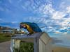 Bronte Beach Sydney (Tonitherese) Tags: bird sydney bronte beach