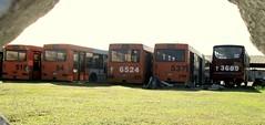 ANTIGUA TERMINAL PUENTE NUEVO, HOY RASTRO Y RECONSTRUCTORA  Ene/12/2017 (ROGALI) Tags: puentenuevo rastro reconstructora guagua omnibus bus habana cuba no537 no6524 no541 no519 maz105 terminalsantaamalia terminalcalvario no36789 busscar rogali