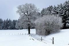 Winter oberhalb Grosshöchstetten (Martinus VI) Tags: grosshöchstetten möschberg winter winterlandschaft hiver schnee nieve snow neige kanton de canton bern berne berna berner bernese schweiz suisse svizzera suiza switzerland y150222 martinus6 martinusvi
