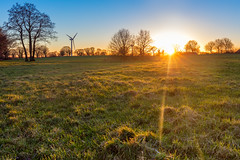 Sun goes down (bhansen.kiel) Tags: happy friday weekend wochenende landscape landschaft wiese field green gelb yellow grün rasen sun sunset sonne sonnenuntergang gold tree bäume baum sky red blue himmel canon 5dsr schleswigholstein germany ger deutschland de