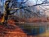 Lago dei due uomini (TRICOR 46) Tags: lago alberi calma