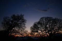 trees at dusk_8320 (armada_rider_jp) Tags: tree trees dusk sunset sky twilight 夕景 シルエット nature