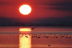 Un nuovo giorno (swaily ◘ Claudio Parente) Tags: alba sunshine maremma maremmans toscana tuscany nikon nikond500 swaily claudioparene capalbio capalbioscalo