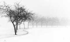 a long and winding trail (marianna_a.) Tags: trees fog montreal winter white black monochrome blackandwhite bw mariannaarmata p3140899