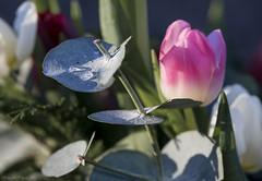 Drop of freshness (Masoud Najari) Tags: flower nature rain drop water fresh