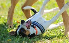 Boris & Henry (malinahr) Tags: light blackandwhite dog sun color nature monochrome sport canon puppy skne play sweden run hund valp gnalv