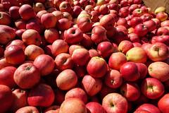 An Apple a Day (gabi-h) Tags: red ontario fruit rural harvest bin apples princeedwardcounty gabih