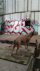 #tcgraffiti #streetart #art #spraypaint #tcgrafflife #graffiti #minneapolisgraffiti (kadillak king) Tags: streetart art graffiti spraypaint minneapolisgraffiti tcgraffiti tcgrafflife