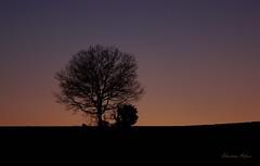 Solitude d'un arbre (rj@ubertsb) Tags: nature soleil sony hiver arbre dsc couch