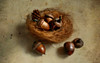 Mighty oaks from little acorns grow. (Through Serena's Lens) Tags: life stilllife brown texture still nest small caps acorn earthy nut pinecone tabletop cupule oaknut pastfeaturedwinner