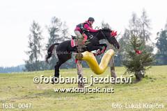163L_0047 (Lukas Krajicek) Tags: military czechrepublic cz kon koně vysočina vysoina southbohemianregion blažejov dvoreček všestrannost dvoreek
