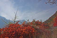 En Valais, ........Couleurs d'automne (luka116) Tags: automne rouge suisse paysage wallis valais 2015 cotinuscoggygria turtmann arbustre getwing