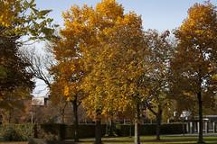Floriade_251015_32 (Bellcaunion) Tags: park autumn fall nature zoetermeer rokkeveen florapark