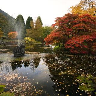 Benmore Botanic Garden ~ Explored