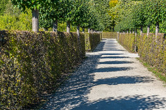 """Eremitage Bayreuth • <a style=""""font-size:0.8em;"""" href=""""http://www.flickr.com/photos/58574596@N06/22621320692/"""" target=""""_blank"""">View on Flickr</a>"""