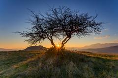 Tramonto Molisano (Alberto Cicchino) Tags: sunset tramonto ray natura alberto lee masters albero mania d800 molise castelpetroso isernia cicchino filtri d800e