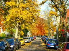 Herbst Farben, autumn colors (dreilander) Tags: auto autumn deutschland saxony herbst sonne farbe baum chemnitz kastanie 2015 ahorn gaslaterne strase kassberg reichsstrase kanzlerstrase agricolastrase emilrosenowstrase enzmannstrase