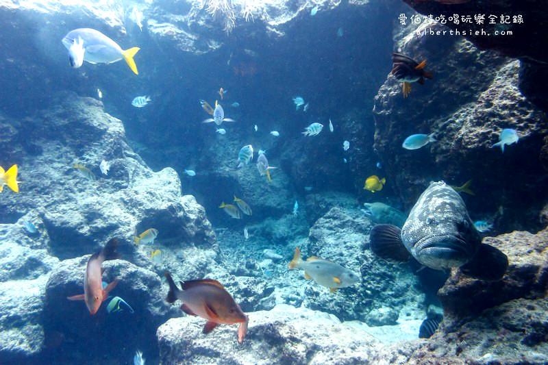 沖繩自駕自由行.海洋水族館