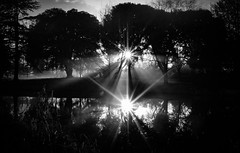 Shining Darkness (Syon Park Sunrise) by Simon & His Camera (Simon & His Camera) Tags: bw blackandwhite black monochrome morning simonandhiscamera syonhousepark syon syonpark syonhouse sunlight shade sunrise fog mist tree silhouette rays bright brentford isleworth middlesex water lake river beauty contrast dawn enchanted gardens london landscape light shadow nature outdoor reflection vignette woods winter white serene
