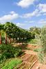 P1780241.jpg (brianduncan) Tags: domaine malika atlas garden