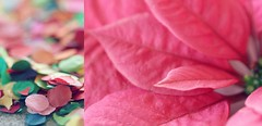 1/365 colorful start (SarahLaBu) Tags: diptych poinsettia weihnachtsstern confetti konfetti macro colorful bunt pink 365the2017edition 3652017 day1365 1jan17 canoneos500d canonrebelt1i
