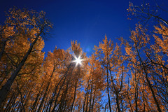 Surrounded (alideniese) Tags: trees nature autumn sun sunflare blue sky grandtetonnationalpark wyoming usa landscape