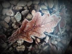 2017-01-06 blurred dead leaf (14) (april-mo) Tags: blurred blur throughglass through àtravers leaf deadleaves autumn