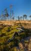 The wooden snake (Johann Glaes) Tags: hautes fagnes high fens belgique wallonie liège eiffel parc park tree arbre landscape sunrise lever soleil paysage